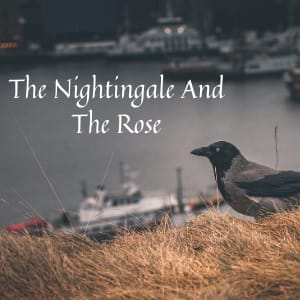 The Nightingale And The Rose love story