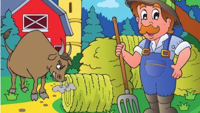 farmer and the bull