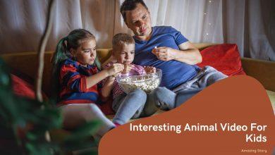 animal videos for kids