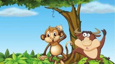 monkey on the tree story